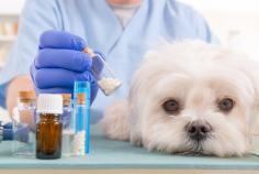 Vétérinaire ostéopathe acupuncture