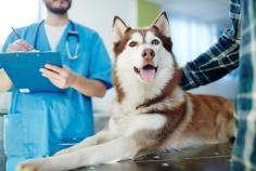 Vétérinaire Gauthier